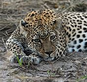 Luxury Safari Botswana Desert and Delta Lodges Okavango Savuti Chobe