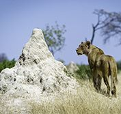 Escorted Tour Zimbabwe Great Ruins Matopos Hwange Victoria Falls