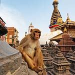 Maldives and Nepal Holidays Kathmandu Himalayas Tiger Safari Chitwan