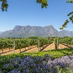 Wheelchair Holiday Vacation Cape Town Stellenbosch South Africa Tour
