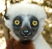 Vanilla Islands Holiday Lemurs Madagascar Beach Vacation Mauritius