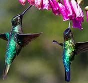 Bird Watching Holiday Costa Rica Guide Sarapiqui Caribbean Pacific