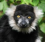 Holiday Madagascar Lemurs Rainforests Andasibe Mantadia Indri Nosy Be