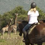 Horse Riding Safari South Africa Beach Horseback Holidays Vacations