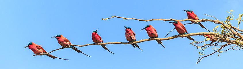 Birding Holidays Safaris South Africa Botswana Costa Rica Brazil India