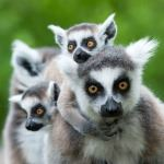 Luxury Holiday Madagascar Lemurs Mandrare River Tsarabanjina Honeymoon